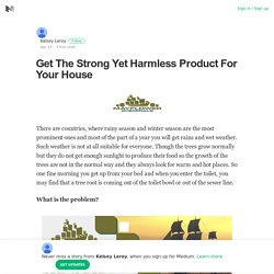 Get The Strong Yet Harmless Product For Your House – Kelsey Leroy – Medium
