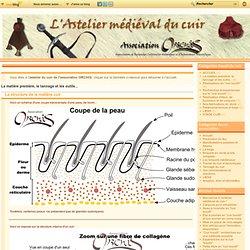 La matière première, le tannage et les outils... - La structure de la… - Histoire des… - Du parchemin au… - Procédé de… - Quelques outils… - Quelques métiers du… - essais de reconstitution d'objets medievaux en cuir.
