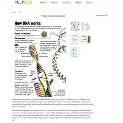 5 dna structure worksheet in Cell - Biological Science Picture Directory - Pulpbits.net
