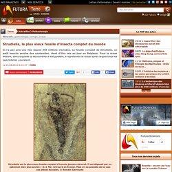 Strudiella, le plus vieux fossile d'insecte complet du monde
