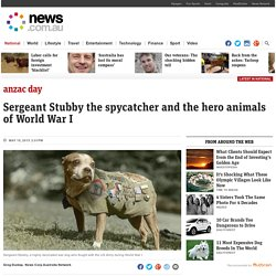 Stubby the spycatcher and the hero animals of World War I