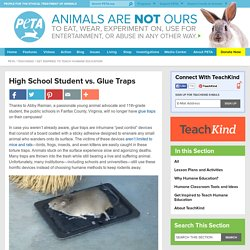 How One Student Got Her School District to Ban Glue Traps