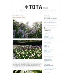 Studio TOTA / Blog