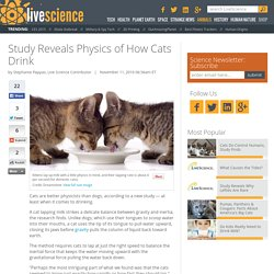 Study Reveals Physics of How Cats Drink