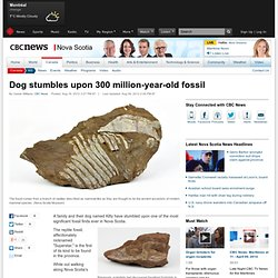 Dog stumbles upon 300 million-year-old fossil - Technology & Science