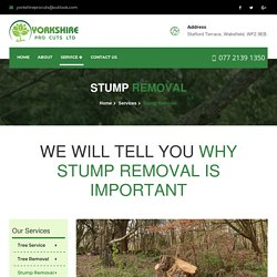 Stump Removal Cost Yorkshire