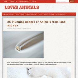 25 Stunning Images of Animals