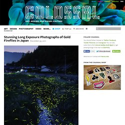 Stunning Long Exposure Photographs of Gold Fireflies in Japan