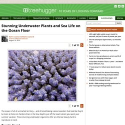Stunning Underwater Plants and Sea Life on the Ocean Floor