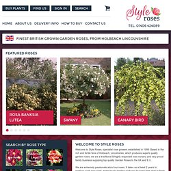 Style Roses Online :- Strawberry Hill