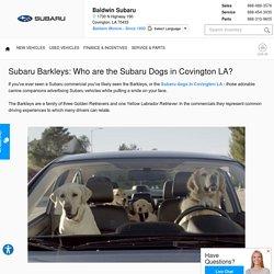 Subaru Barkleys: Who are the Subaru Dogs in Covington LA?