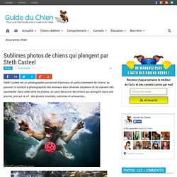 Sublimes photos de chiens qui plongent par Steth Casteel : Guide Du Chien
