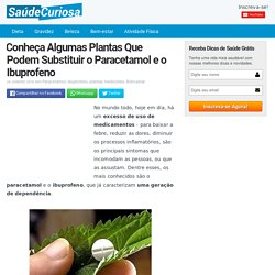 Conheça Algumas Plantas Que Podem Substituir o Paracetamol e o Ibuprofeno