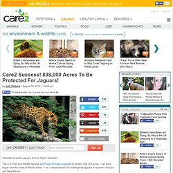 Success! 838,000 Acres To Be Protected For Jaguars!