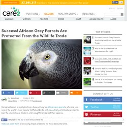 Success! African Grey Parrots Are Protected From The Wildlife Trade