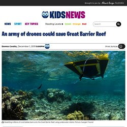 Successful coral IVF trial using drones and inflatable pools on Great Barrier Reef