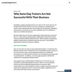 Why Some Dog Trainers Are Not Successful With Their Business