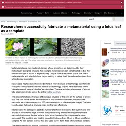Researchers successfully fabricate a metamaterial using a lotus leaf as a template