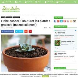 Fiche conseil : Bouturer les plantes grasses (ou succulentes)