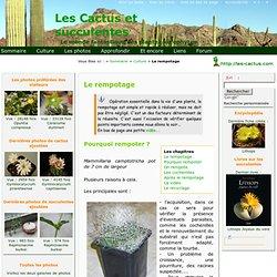 Le rempotage des cactus et plantes succulentes ou grasses. Rempoter, dépoter, les racines, les cochenilles.