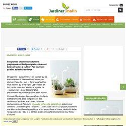 Succulentes : des plantes d'intérieur faciles et décoratives