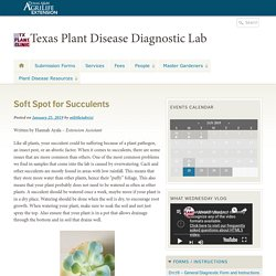 Texas Plant Disease Diagnostic Lab