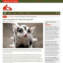 What Do Sugar Gliders Eat: Feeding A Pet Sugar Glider