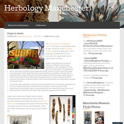 Sugar is sweet… « Herbology Manchester