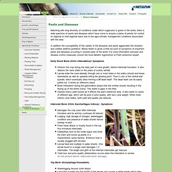 DACNET_NIC_IN - Major Insect Pest Management Of Sugarcane Crop