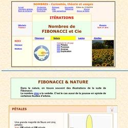 suite de Fibonacci dans la nature