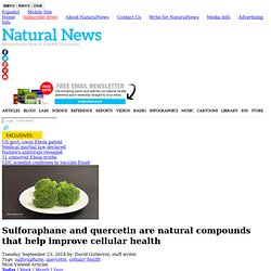 Sulforaphane and quercetin are natural compounds that help improve cellular health