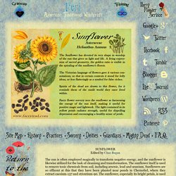 Sunflower: Magical Uses Of Sunflower In Magic Victorian and New