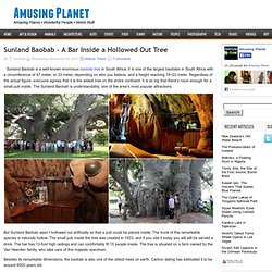 Sunland Baobab - A Bar Inside a Hollowed Out Tree