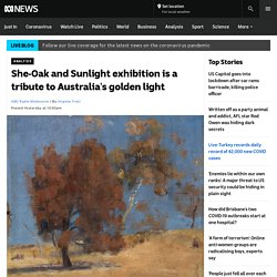 She-Oak and Sunlight exhibition is a tribute to Australia's golden light