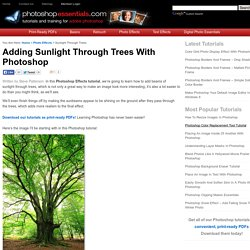 Adding Sunlight Through Trees