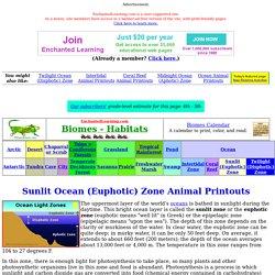 Sunlit Ocean (Euphotic) Zone