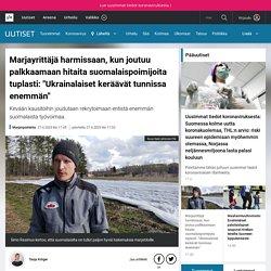 """Marjayrittäjä harmissaan, kun joutuu palkkaamaan hitaita suomalaispoimijoita tuplasti: """"Ukrainalaiset keräävät tunnissa enemmän"""""""