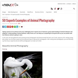 50 Superb Examples of Animal Photography - Noupe Design Blog