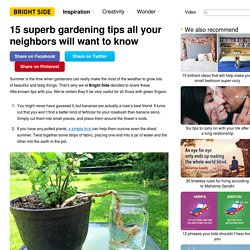 15 superb gardening tips all your neighbors will want to know