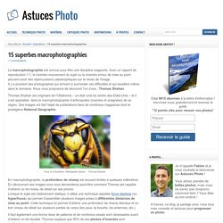 15 superbes macrophotographies