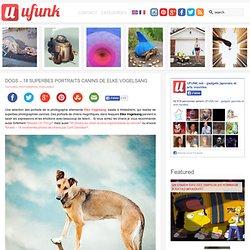 Dogs – 18 superbes portraits canins de Elke Vogelsang