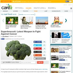 Superbroccoli: Latest Weapon In Fight Against Cancer