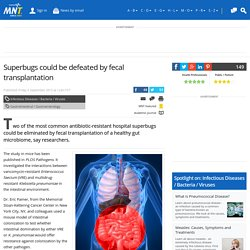 Superbugs could be defeated by fecal transplantation