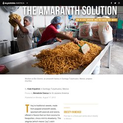 The Aztec superfood amaranth fighting Mexican obesity