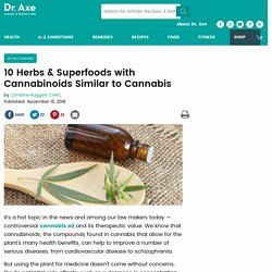 10 Herbs & Superfoods with Cannabinoids Similar to Cannabis