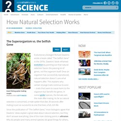 The Superorganism vs. the Selfish Gene - How Natural Selection Works