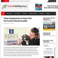 5 Best Supplements for Dogs That Pet-Parents Should Consider