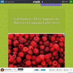 Josh Jambon's Fleet Supports the Harvest of Louisiana Light Sweet