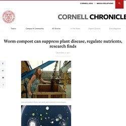 Worm compost can suppress plant disease, regulate nutrients, research finds