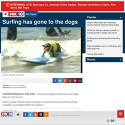 Surfing has gone to the dogs - Story